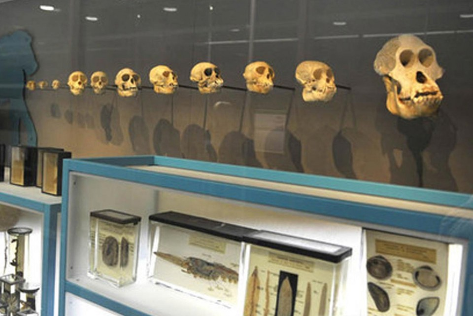 Illuminated museum displays